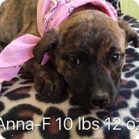 Adopt A Pet :: Anna - Albany, NY