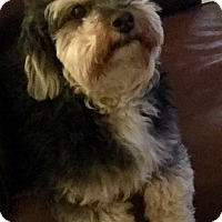 Adopt A Pet :: Bubbles - Phoenix, AZ