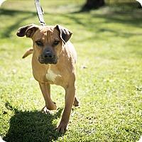 Adopt A Pet :: Lady - Daleville, AL