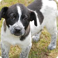 Adopt A Pet :: Gage - Manning, SC