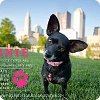 Adopt A Pet :: Bonita - Bellbrook, OH