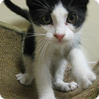 Adopt A Pet :: Tobey - Gary, IN