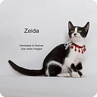 Adopt A Pet :: Zelda - Arcadia, CA
