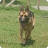 Adopt A Pet :: Lexy - Mocksville, NC