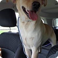 Adopt A Pet :: Jake - Rockford, IL