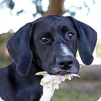 Adopt A Pet :: CHARLOTTE - LAFAYETTE, LA