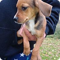 Adopt A Pet :: Kristei - Kendall, NY