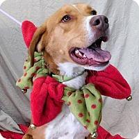 Adopt A Pet :: Dobber - Montgomery City, MO