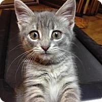 Adopt A Pet :: Pearl aka Zuzu! - Cincinnati, OH