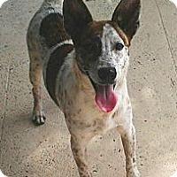 Adopt A Pet :: Samurai Jack - Jacksonville, FL