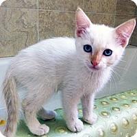 Adopt A Pet :: Teddy - Irvine, CA
