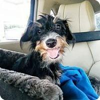 Adopt A Pet :: Mercedes - Sugar Land, TX