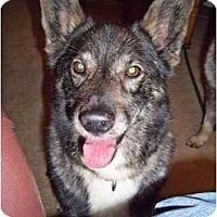 Adopt A Pet :: Rex - Belleville, MI
