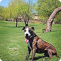Adopt A Pet :: Diablo - Scottsdale, AZ