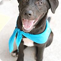Adopt A Pet :: Eeyore - Homewood, AL