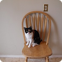 Adopt A Pet :: Claudia - North Middlesex, ON