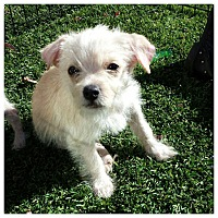 Adopt A Pet :: George - West LA, CA
