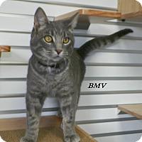 Adopt A Pet :: BMV - Dover, OH