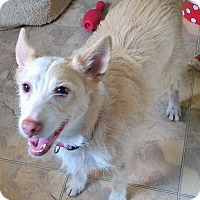 Adopt A Pet :: Clyde - Mississauga, ON