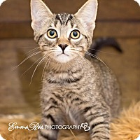 Adopt A Pet :: Minute - Sterling Heights, MI