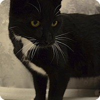 Adopt A Pet :: COLLINS - Sandusky, OH