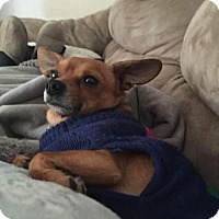 Adopt A Pet :: Nicholas - Livonia, MI