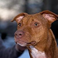 Adopt A Pet :: Lucy - URGENT!! - Clarksville, TN