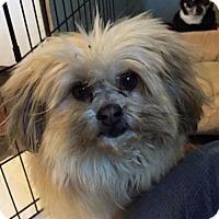 Adopt A Pet :: Teddy - Spartanburg, SC