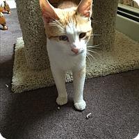 Adopt A Pet :: Clementine Courtesy Listing - Sparta, NJ