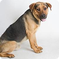 Adopt A Pet :: *DALLAS - Sacramento, CA