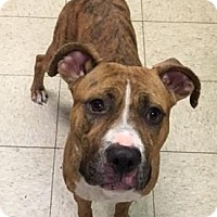 Adopt A Pet :: Kimi - Cleveland, OH