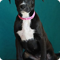 Adopt A Pet :: Baby Girl - Waldorf, MD