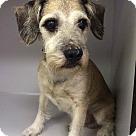 Adopt A Pet :: Emery