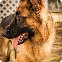 Adopt A Pet :: Vader - Phoenix, AZ