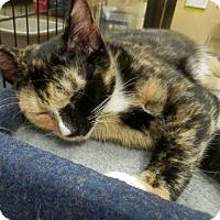 Adopt A Pet :: Dawn - Hallandale, FL