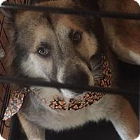 Adopt A Pet :: Kenta - Springfield, MO