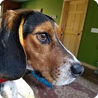 Beagle Mix Dog for adoption in Princeton, Minnesota - Sadey