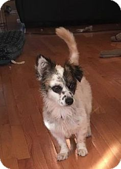 Dachshund Mix Dog for adoption in Wichita, Kansas - Charlie