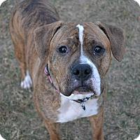 Adopt A Pet :: Presley Pending Adoption - Lancaster, PA