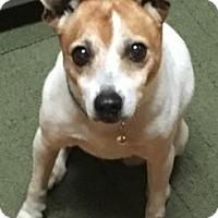 Adopt A Pet :: Lucille - Centerville, GA