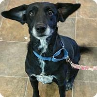 Adopt A Pet :: Jane - Lisbon, OH