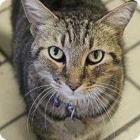 Adopt A Pet :: Matty - Bradenton, FL