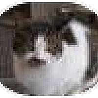 Adopt A Pet :: Esmerelda -snow ti - Cleveland, OH
