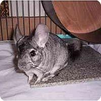 Adopt A Pet :: Boo - Avondale, LA
