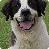 Adopt A Pet :: TOBY - Glendale, AZ