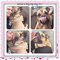 Adopt A Pet :: Salsa - ....., FL