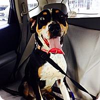 Adopt A Pet :: Daisy - Miami, FL