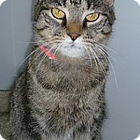 Adopt A Pet :: Alley Cat - Hamburg, NY
