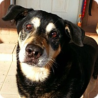 Adopt A Pet :: Benjamin Franklin - Alamogordo, NM