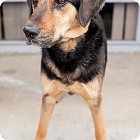 Adopt A Pet :: Ma Barker - San Diego, CA